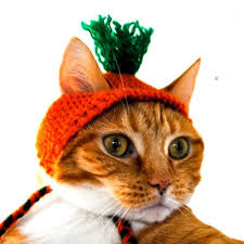 costume for cat carrot costume for cats knit cat hat one cool gift