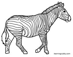 Zebra Coloring Pages Amazing Page