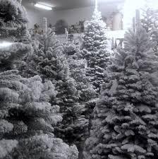 Snow Flocking For Christmas Trees by Flocked Trees Palmer U0027s Christmas Trees