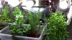 fall indoor garden grow lights Indoor Garden Tips Growing Herbs