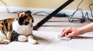 hilfe meine katze pieselt überall hin was jetzt