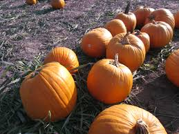 Cal Poly Pumpkin Patch Promo Code by The Love For Fashion U0026 Many Other Things