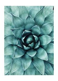 succulent poster cactus poster poster nature