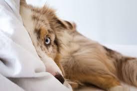 darf der hund im bett schlafen hundetrainer dresden