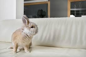 stockfotos kaninchen haus bilder stockfotografie kaninchen