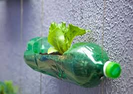 I Use Waste Plastic Bottles As Plant Holders Have Greenfection