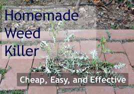 Tips And Tricks Homemade Weed Killer That Is Safe For Kids Pets