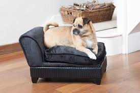 Pottery Barn Dog Bed by Bed For Pug Dogs Perplexcitysentinel Com