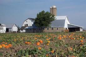 Great Pumpkin Patch Arthur Il by Youth Group And Educational Tours