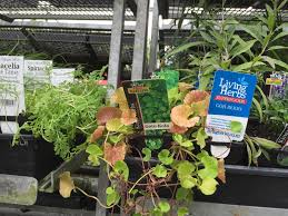 Incredible Edibles And More @ Kings Plant Barn   Nom Nom Panda Archie Eats Kings Plant Barn Archies Journal By Michael Ngariki Garden Design Cafe Henderson Aucklandnzcom Daniels Wood Land On The Set For Redwood Kippen Home Facebook Youtube Monthly Gardening Checklist December