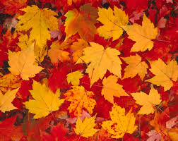 Fall Foliage Season In Bloom | Blog.gopenske.com Best 25 Rental Trucks Ideas On Pinterest Budget Rental Truck Now Camper Another Backalley Find Urban Sketchers Maine Trailer Registrations Rentals Sales Leasing Moving Help Labor You Need Xtreme Movers Septic Pumping Skowhegan Me Central Portable Compass Truck And Stock Photos Images Alamy Med Heavy Trucks For Sale Street Smart Truckmounted Attenuator Bus U Haul Review Video How To 14 Box Van Ford