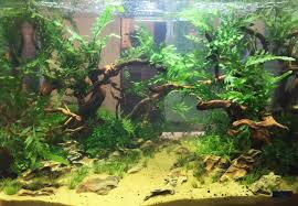 The Different Styles Of Aquascaping - Ukasc.co.uk Aquascaping Lab How To Mtain Trimming Clean And Change Aquascape Pinterest Red Rock Journal By James Findley The Green Machine Pennywort Brazilian Aquatic Plant Google Search Aquascaping Giuseppe Nisi Giuseppe_nisi_aquascaping Instagram Aquarium Sand Layouts Nature For Simons Blog Layout Ideas Tag Layout Aquascape Marcel Dykierek Aqua Rebell Shaping I Undaterworlds 85 Ian Holdich Tropica Plants