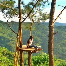 7 Tempat Di Hutan Pinus Mangunan Yang Menarik Kunjungi