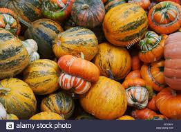 Varieties Of Pumpkins Uk by Green Pumpkins Stock Photos U0026 Green Pumpkins Stock Images Alamy