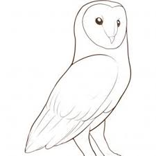 Barn Owl Drawing   Best Images Collections HD For Gadget Windows ... Pencil Drawings Of Old Barns How To Draw An Barn Farm Owl On Branch Drawing Tattoo Sketch Original Great Finished My Barn Owl Drawing Album On Imgur By Notreallyarstic Deviantart Art Black And White Panda Free Tree Line Download Linear Vector Hand Stock 263668133 Top Theme House Clipart Photos Country Projects For Kids Sketching Tutorial With Quick And Easy Techniques Of A Silo Ideals Illinois Experimental Dairy South