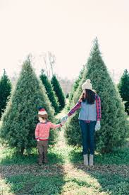 Christmas Tree Farm Packages In Boone Nc by Northern California Christmas Tree Farm Shoot Christmas