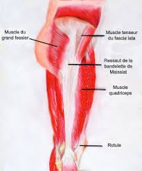 douleur interieur genou course a pied coin des coureurs