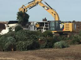 Christmas Tree Recycling Carmel Valley San Diego by San Diego Esd Sandiegoesd Twitter
