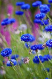 38 best Blue images on Pinterest