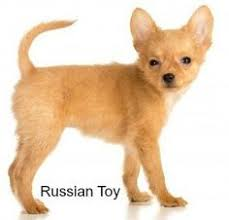 Quiet Small Non Shedding Dog Breeds by Quiet Small Breed Dogs Top Ten Choices Small Breed Dogs Dog