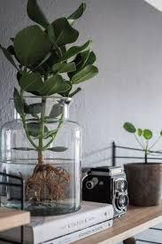 water plants die pflegeleichte zimmerpflanze alles ber den