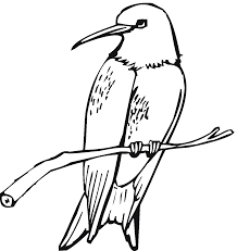 Free Printable Hummingbird Coloring Pages