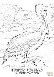 Click The Louisiana State Bird Coloring