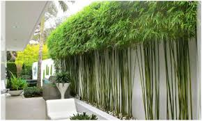 Backyards: Bamboo Backyard. Bamboo Patio Privacy Fence. Backyard ... Install Bamboo Fence Roll Peiranos Fences Perfect Landscape Design Irrigation Blg Environmental Filebamboo Growing In Backyard Of New Jersey Gardener Springtime Using In Landscaping With Stone Small Square Foot Backyard Vegetable Garden Ideas Wood Raised Danger Garden Green Privacy For Your Decorative All Home Solutions Spiring And Patio Small Square Foot Vegetable Gardens Oriental Decoration How To Customize Outdoor Areas Privacy Screens