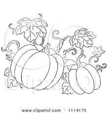 Drawn pumpkin vine 12