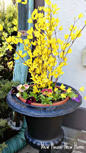 Faux Forsythia In Spring Urns