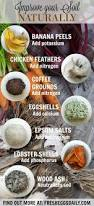 Fertilizer Requirements For Pumpkins by Fertilizer From Banana Peels Egg Shells Coffee Grounds And