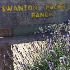 Santa Cruz Pumpkin Patch 2015 by 7 Family Friendly Stops For The Perfect Highway 1 Road Trip