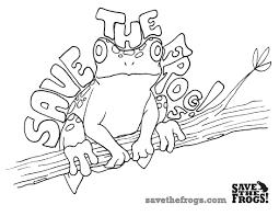 Teachers For Frogs