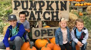 Best Oklahoma Pumpkin Patches by How To Pick The Perfect Pumpkin For Kids With A Trip To The