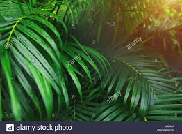 Bright Green Palm Leaves With Tropical Sunlight Wallpaper In Exotic Endless Summer Country
