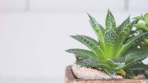die 10 besten pflanzen für dein schlafzimmer