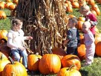 Bengtson Pumpkin Farm Chicago by Bengtson U0027s Pumpkin Farm The Happiest Place In Illinois Burr
