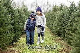 Frasier Christmas Tree Cutting by Nieman U0027s Tree Farm Kentucky Christmas Tree Association