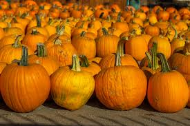 Cal Poly Pumpkin Patch 2016 by 17 Halloween Pumpkin Carving Ideas To Take Your Jack O U0027 Lantern