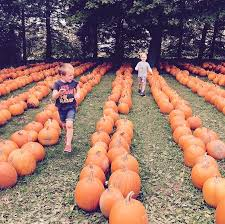 Pumpkin Patch Illinois 2016 by Fall Guide To Galena Illinois Top 7 Things To Do Galena Country