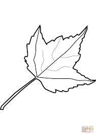 Maple Leaf Coloring Page Printable Pages Click The Palm Leaves Plants