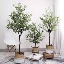 olivenbaum pflege im topf oder garten wissenswertes und