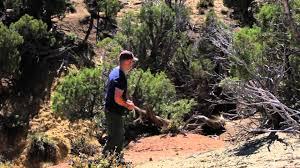 Does Deer Shed Their Antlers by Bone Collector Hunting Colorado Mule Deer U0026 Elk Antlers Youtube