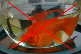 aquarium poisson prix la des poissons rouges