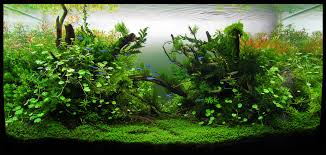 Florestassunmersas #ADAIberica #YagoAlonso #Lisboa #aquarium ... My Life Story Aquascape Gallery Aquascapes Pinterest Aquascaping Live 2016 Small Planted Tanks The Surreal Submarine World Of Amuse Category Archives Professional Tank Enchanted Forest By Tommy Vestlie Aquarium Design Contest Awards 100 Ideas Aquariums Fish Tanks And Vivarium Avatar Fish Tank Google Search Design Aquascape Ada Aquascaping Contest Homedesignpicturewin Award Wning Amenagementlegocom Legendary Aquarist Takashi Amano Architecture
