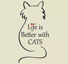 best 25 cat quotes ideas on cat cat things and