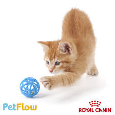 PETFLOW - Proven Ecommerce Email Campaigns You Can Steal Kauffman Tire Newnan Ga Childrens Place Promo Codes Coupons Ka Code Ticketmaster Disney On Ice Kidzania Dubai Ava Fertility Discount Uk Logo Infusion Coupon My My Airtel App Sand Canyon Barber Petflow Hashtag Twitter Petcarerx 20 Save With Verified Petco Coupons Promo Codes Cats Coupon Discounts And Promos Wethriftcom Shopping Make Up Deals Posts 5 Star Gainesville 25 Off First Autoship Order Petflow Coding