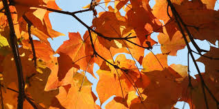 Best Pumpkin Patches Indianapolis by This Is The Best Time To See Fall Leaves In Indiana