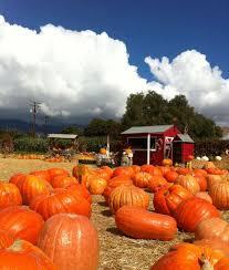 Mission Valley Pumpkin Patch by Closed Lane Farms Pumpkin Patch Santa Barbara Inspirationstation