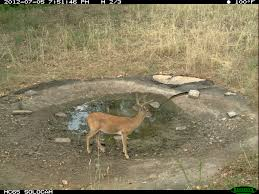 Does Deer Shed Their Antlers by White Tailed Deer Facts Velvet Antler Growth Hunting Advice And